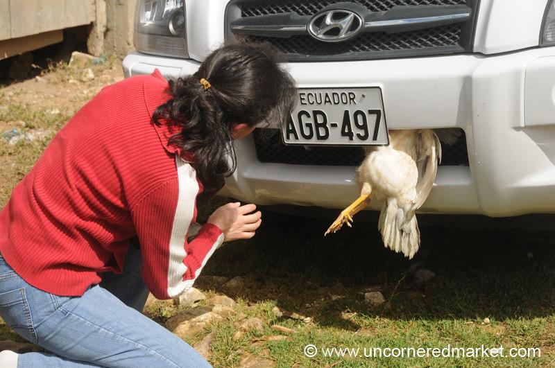 Oops! Dead Chicken - Near Cuenca, Ecuador