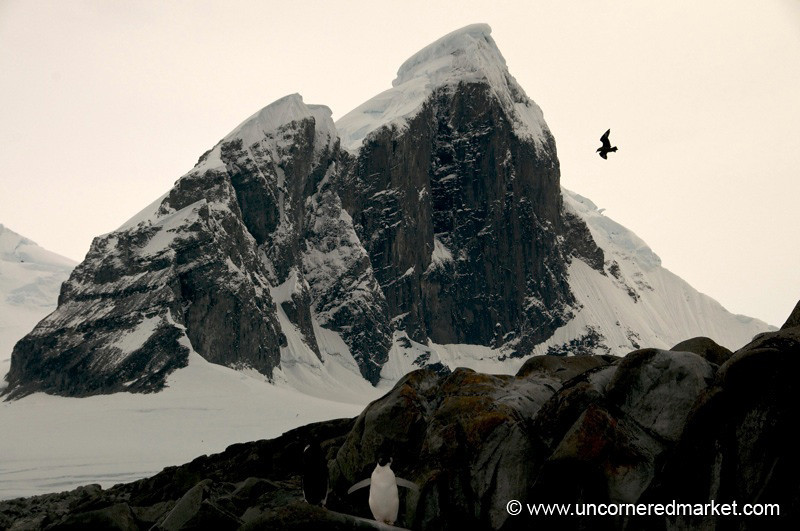 Penguin, Mountain and Snow - Antarctica