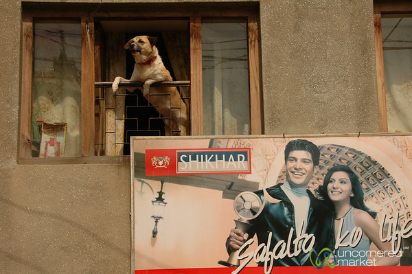 Of Dogs and Bollywood - Patan, Nepal