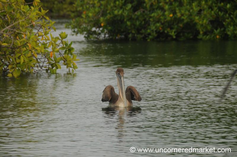 Pelican Landing - Galapagos Islands