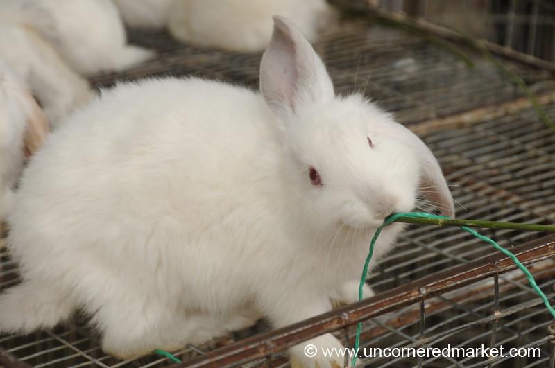 Bunny Snack - Cuenca, Ecuador