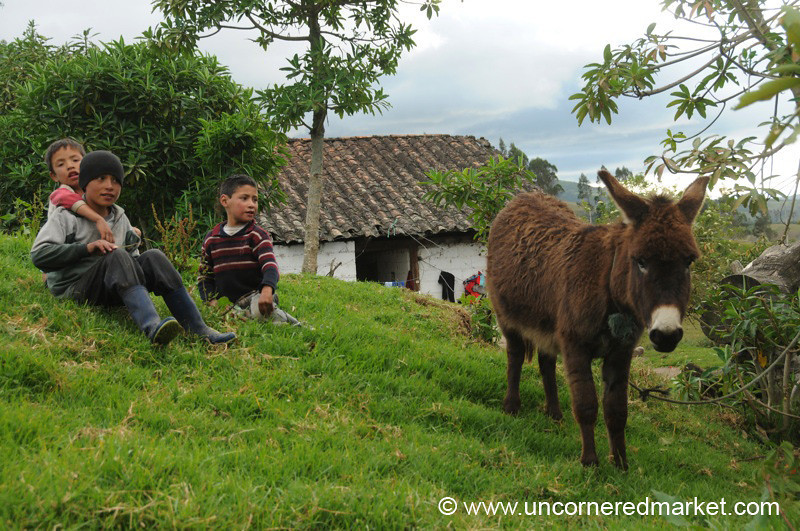 Kids and Their Donkey - Otavalo, Ecuador