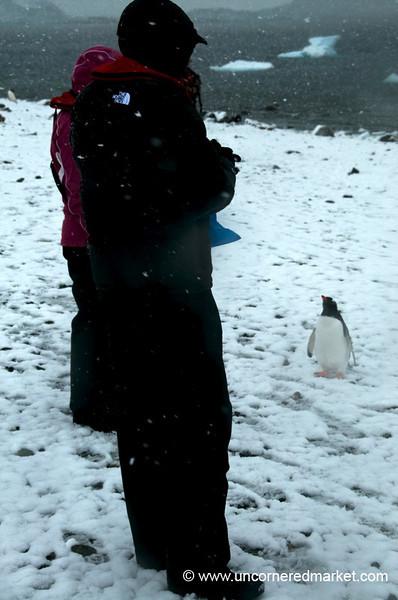 Penguin vs. Man - Danko Island, Antarctica