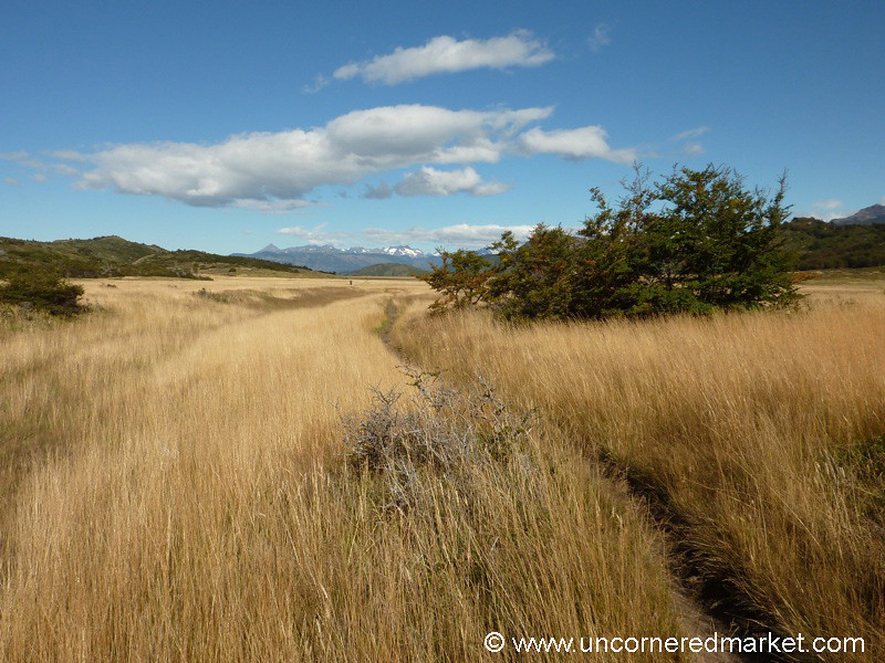 Fields of Gold - Torres del Paine National Park, Chile
