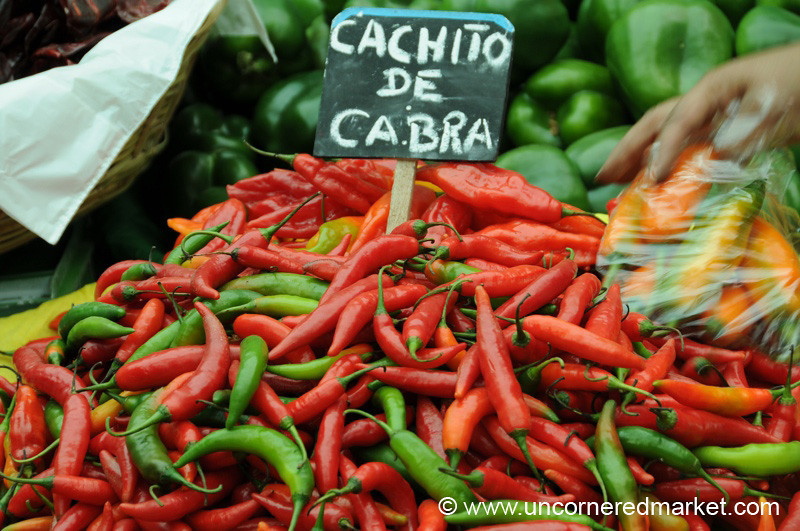 Spicy, Little Chilies - Mistura Gastronomy Festival in Lima, Peru