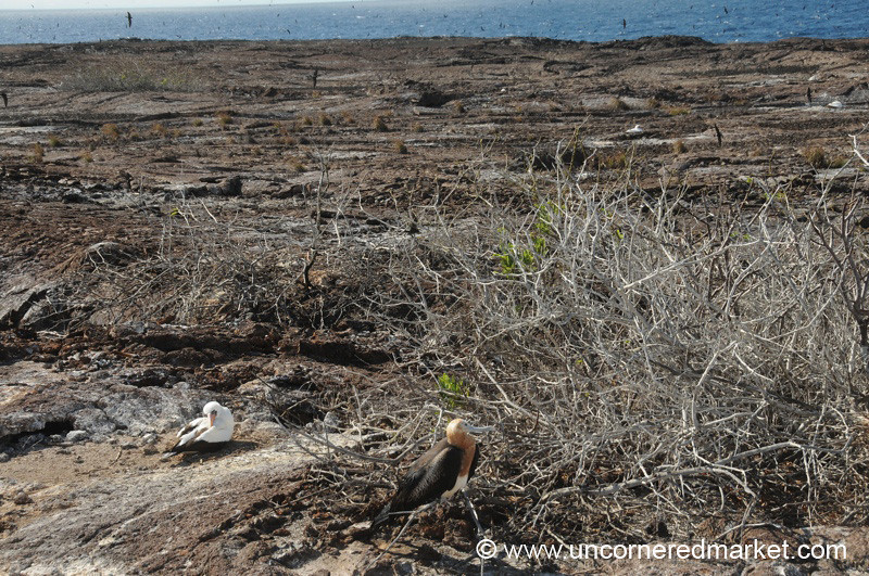 Genovesa Landscape - Galapagos Islands