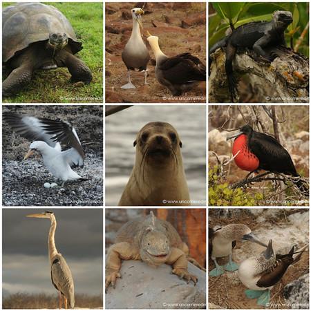 Galapagos Islands Mosaic