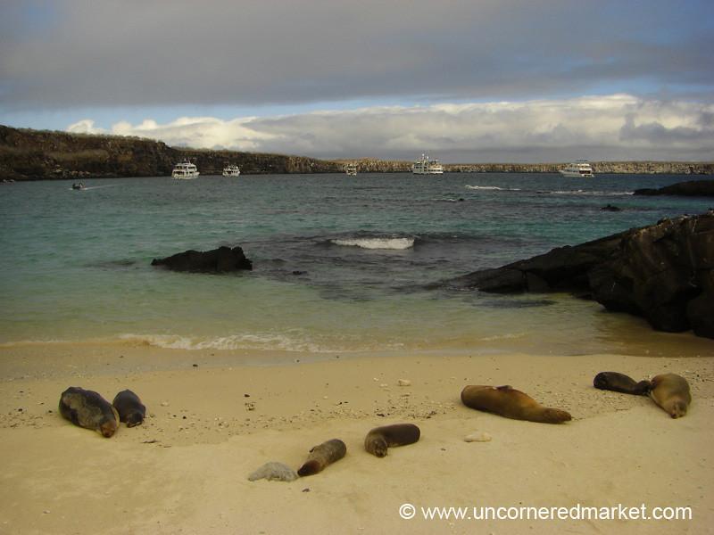 Sea Lionscape - Galapagos Islands