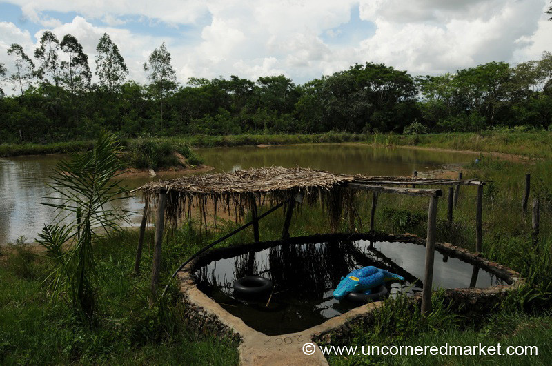 Creating a Pleasant Environment - Concepcion, Paraguay