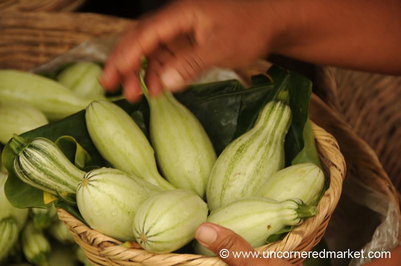 Zucchini - Juayua, El Salvador