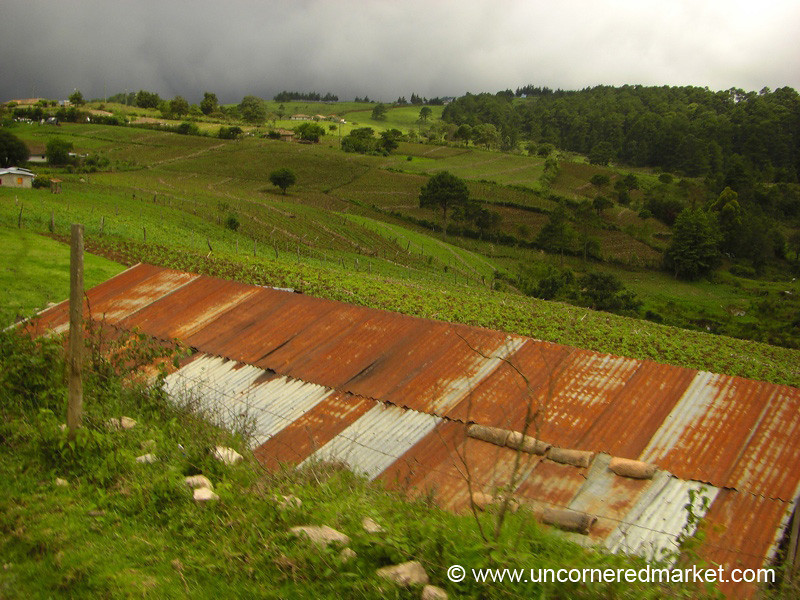 Rusted Tin Roof and Lush Landscape - Marcala, Honduras