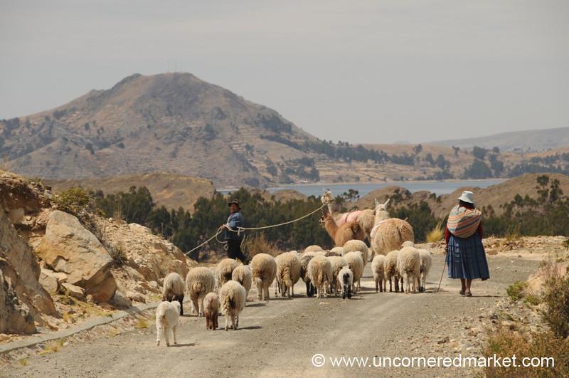 Leading Animals to Greener Pastures - Yampupata, Lake Titicaca, Bolivia