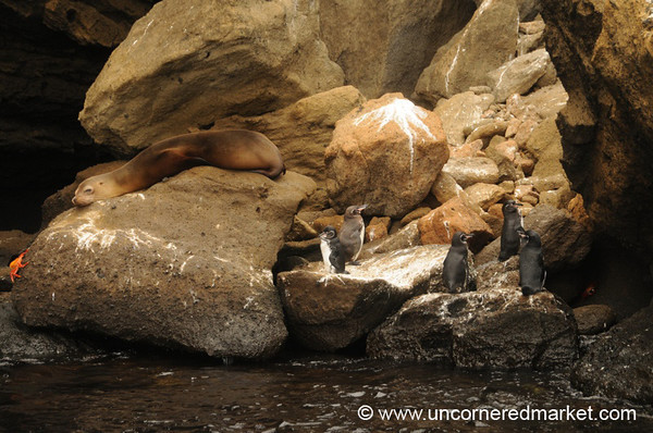 Hanging Out Together - Galapagos Islands