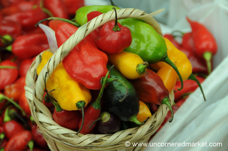 Colorful Basket of Chilies - Mistura Gastronomy Festival in Lima, Peru