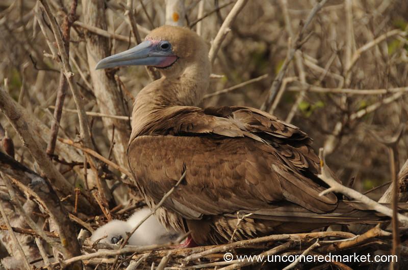 Motherly Care - Galapagos Islands