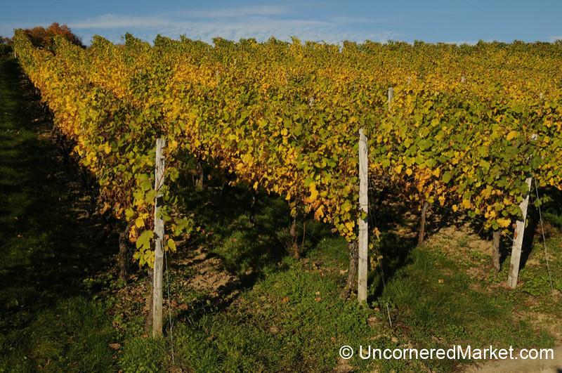 Autumn Vineyards - Frickenhausen, Germany