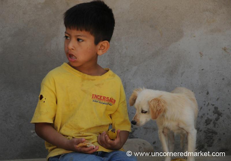 Curious Dog - Tarija, Bolivia