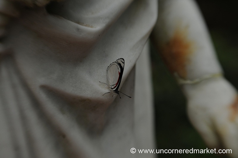 Butterfly on the Statue - Ruta de las Flores, El Salvador