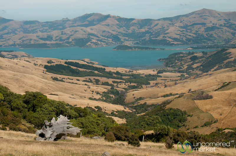 Canterbury Landscapes Near Akaroa, New Zealand