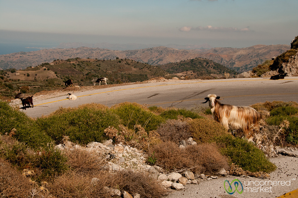Sheep Crossing and Mountains - Crete, Greece