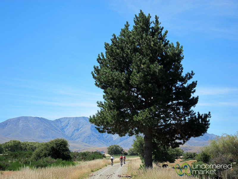 Biking Along Rail Trail - Central Otago, New Zealand
