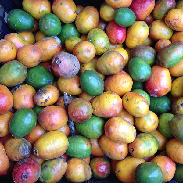 What do they look like? Actually, it's a bin of Jocote, a nifty fruit we tasted for the first time in Costa Rica. Unusual skin, big pit, beautifully sweet, mango-like flesh. One of the most pleasant new fruit discoveries for us in a while.