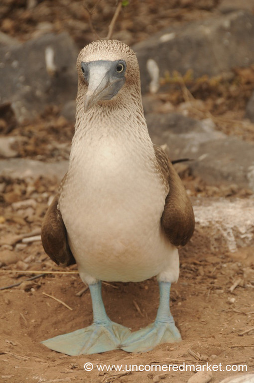 Waiting to be Impressed - Galapagos Islands