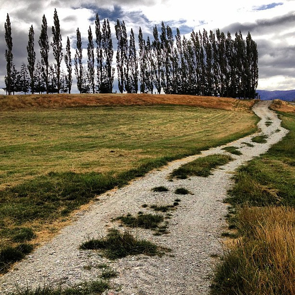Gravel trails and poplars, a mountain bike outing between the Kawarau and Shotover Rivers #newzealand