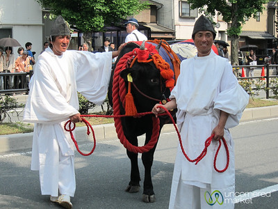 Sacred Bull at Aoi Matsuri Shinto Festival - Kyoto, Japan