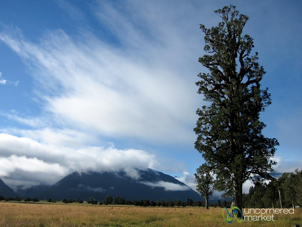 Lone Tree - Central Otago, New Zealand