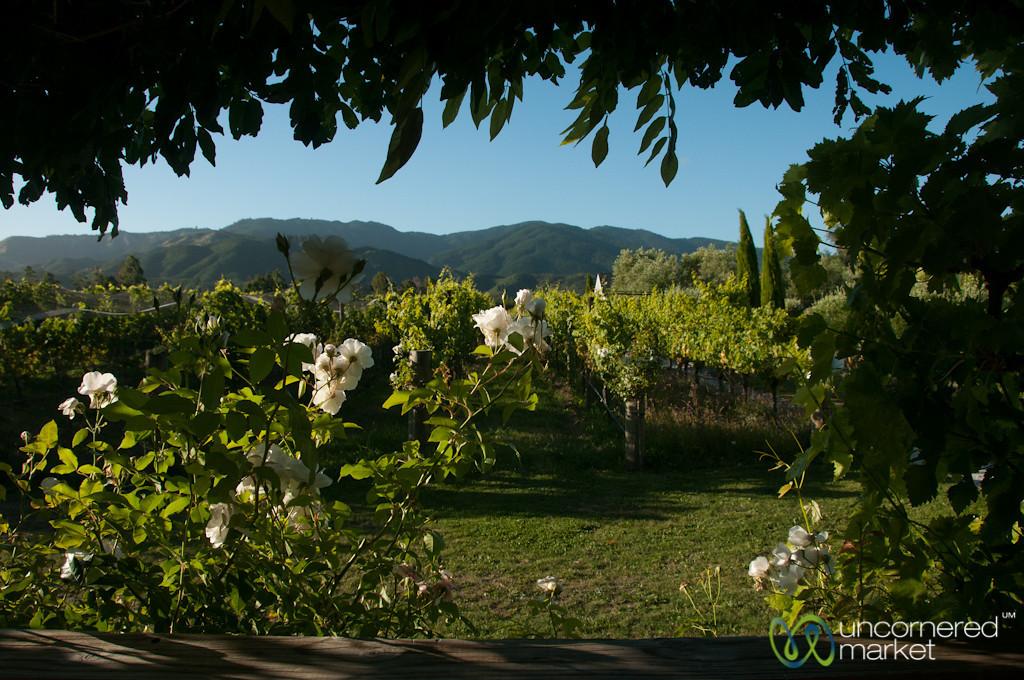Rose Bushes at the Wine Cottage - Hans Herzog Winery, New Zealand