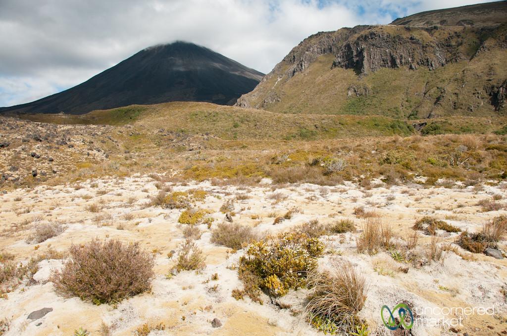 Layers of Colors and Vegetation at Tongariro National Park, New Zealand