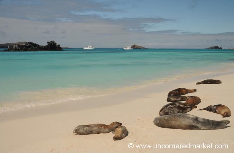 Lazy Sea Lions - Galapagos Islands