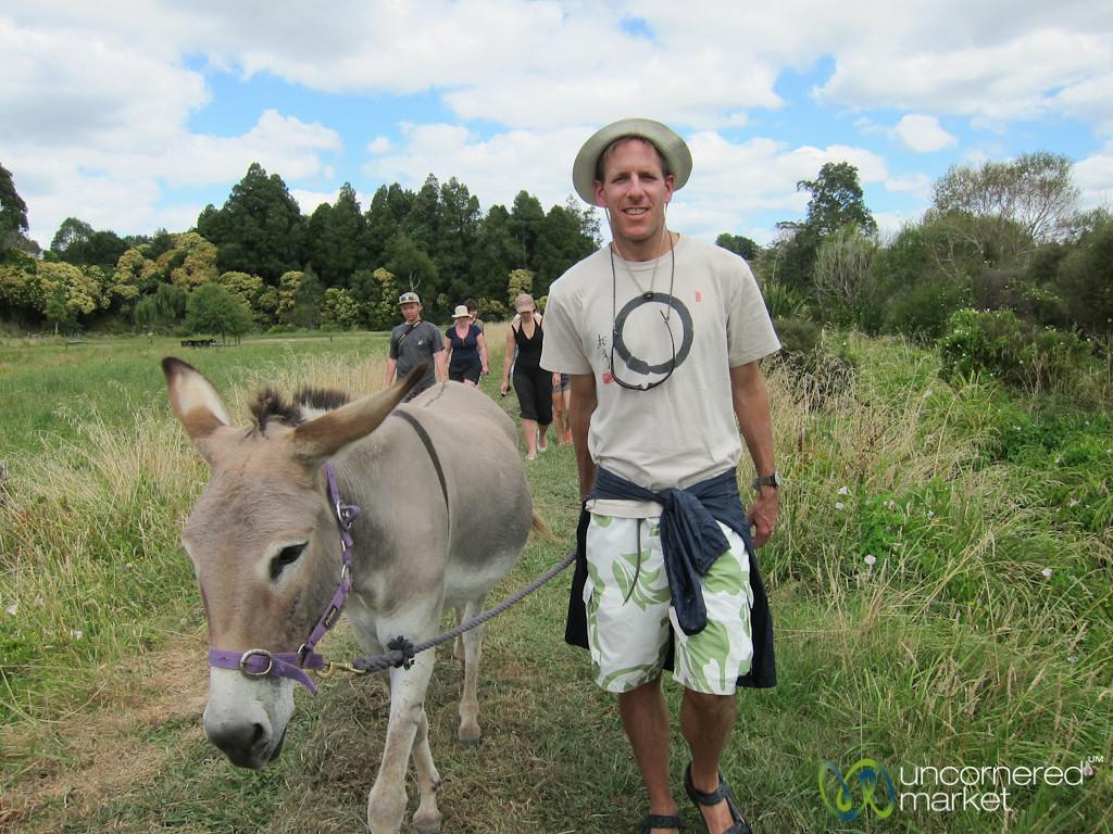 Dan with his Donkey - Farm Near Raglan, New Zealand