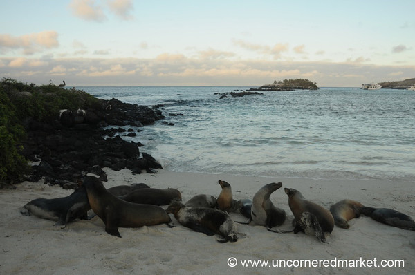 Late Afternoon Sea Lions - Galapagos Islands