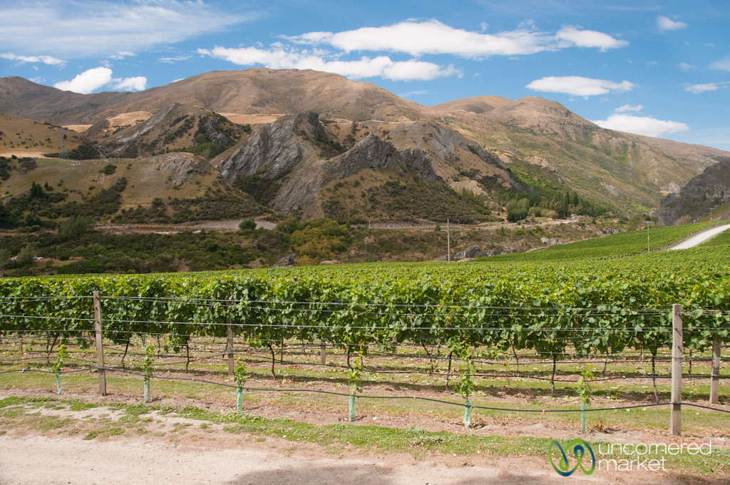Vineyards at Chard Farm - Queenstown, New Zealand
