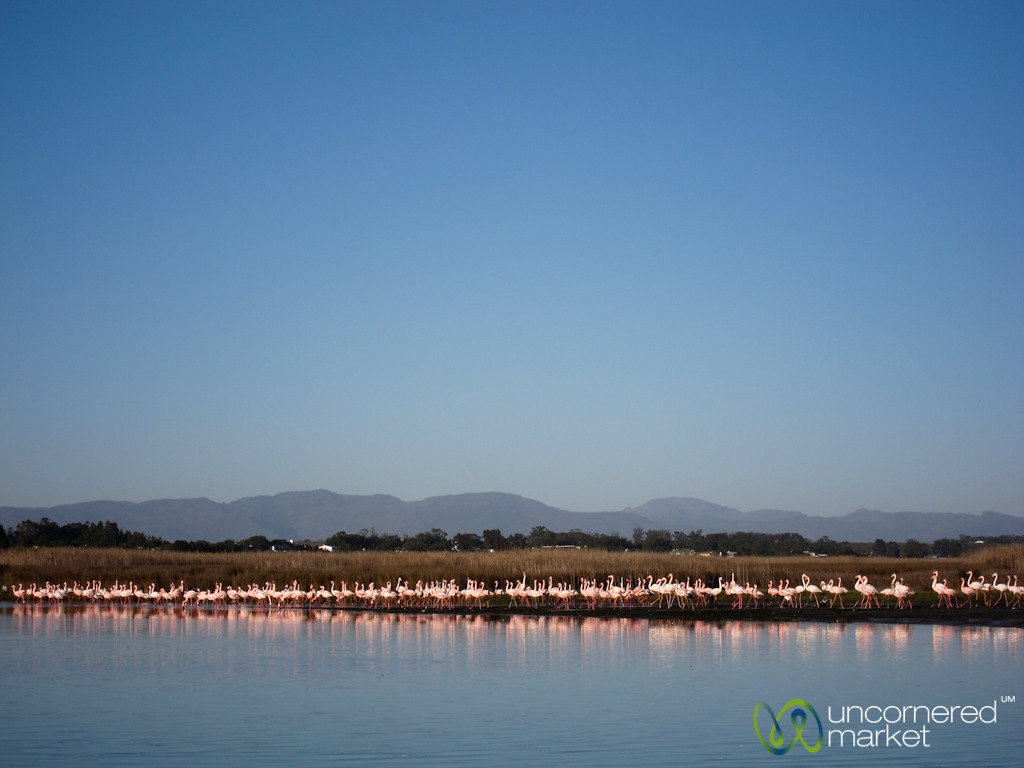 Flamingos and Reflections - Port Owen, Western Cape