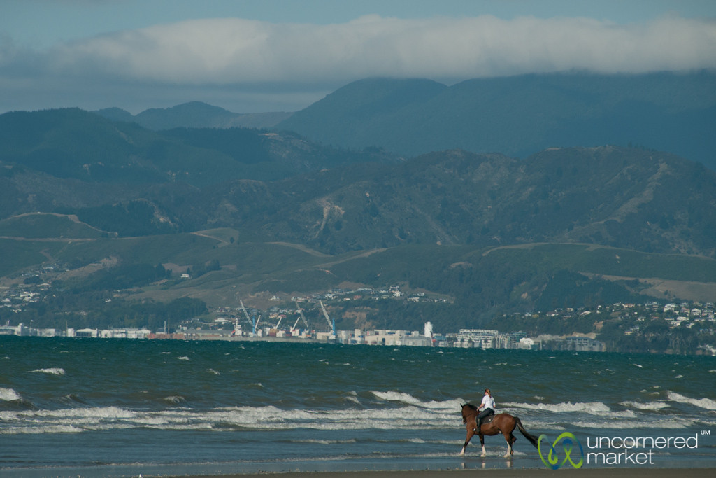 Horseback Riding at Rabbit Island - Nelson, New Zealand