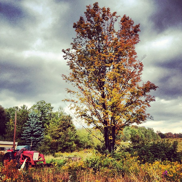 #Fall on the farm, one from the recent memory bin for #frifotos