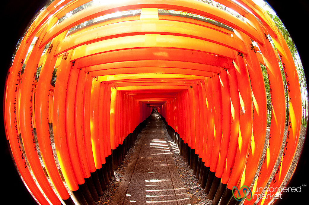 Torii (Gates) of Fushimi Inari Shrine - Kyoto, Japan