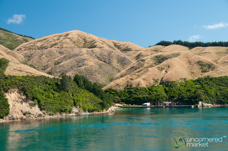 Taking the Ferry from Wellington to Picton - New Zealand