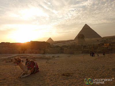 Camel at the Great Sphinx - Giza Pyramids, Egypt
