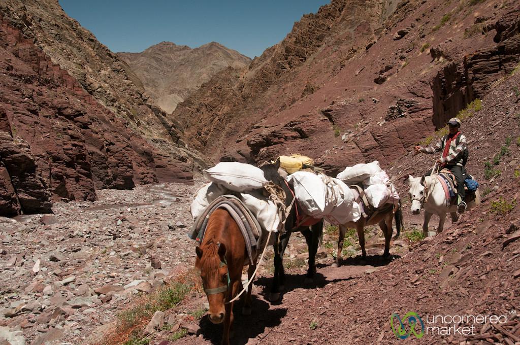 Horses on Way Up to Gongmaru La Pass - Ladakh, India