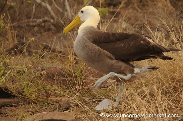 Awkward on Land - Galapagos Islands