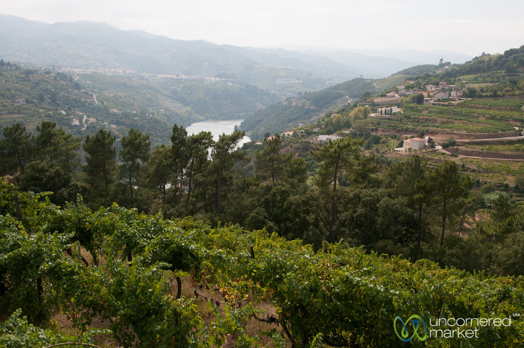 Douro Valley Vineyards - Portugal