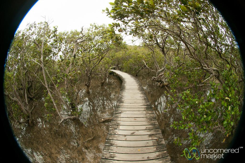 Path Through the Mangrove Forest - Haruru Falls Trail, New Zealand