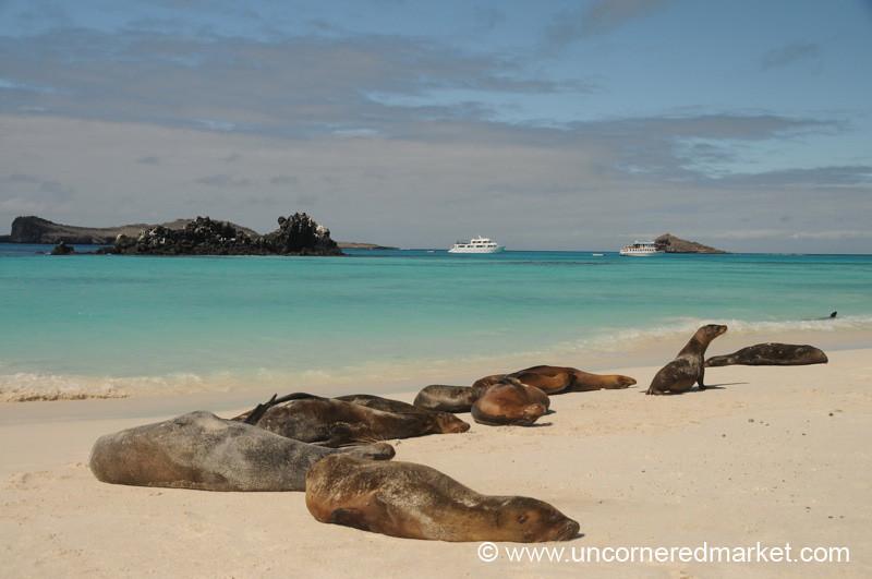Morning Nap - Galapagos Islands