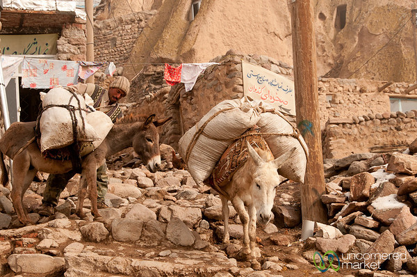 Donkeys in Kandovan, Iran