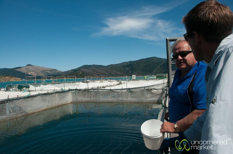 Chris Explains Salmon Fishery - Sea Odyssea, New Zealand