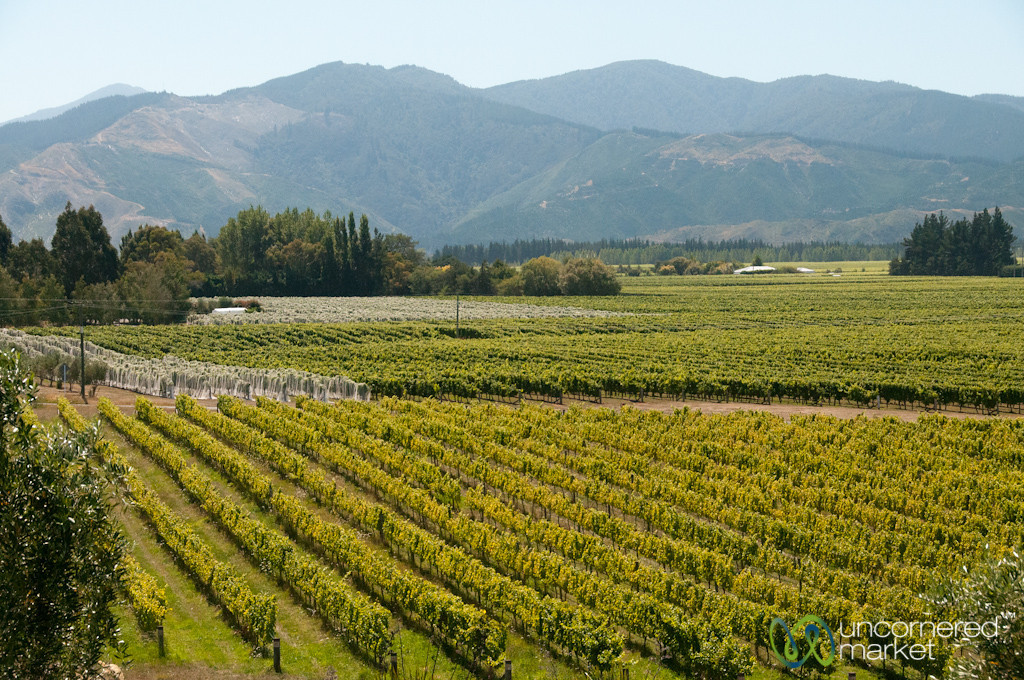 Giesen Vineyards - Marlborough, New Zealand